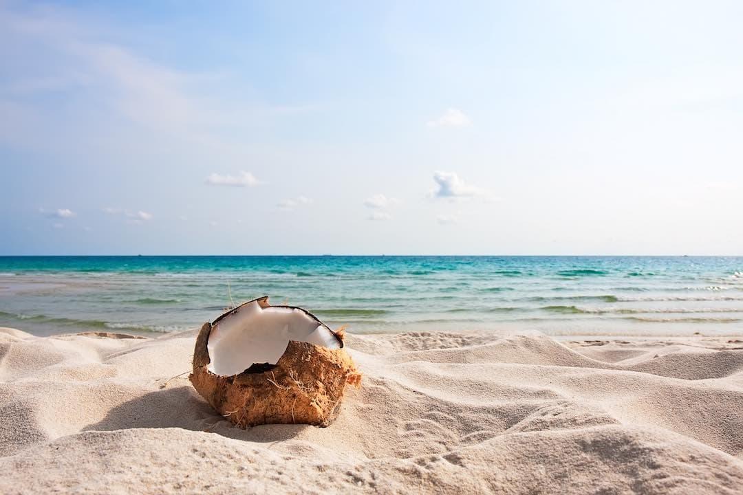 Coconut Immune Boosting Superfood by Dr. Sara Detox Toronto Naturopath